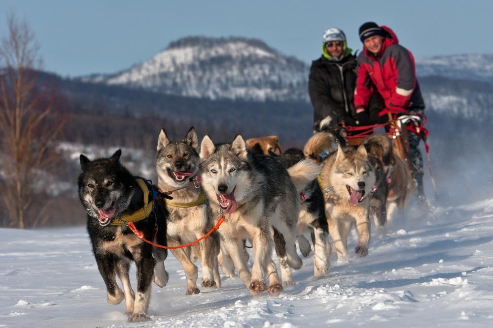 chien-de-traineau-team-building-sportif